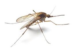 weber-vila-services-desinsectisation-moustiques-toulouse
